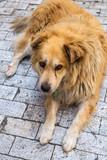 Stray dog - 175117495