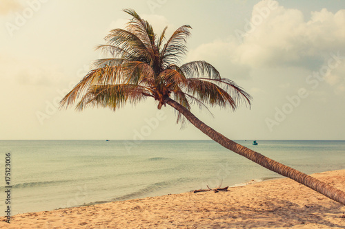 palm tree on empty beach - one palm tree on oceach with ocean background - 175123006