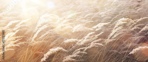 Deurstickers Natuur sunny autumn Nature background; abstract October landscape