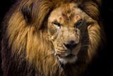 King Lion  - 175129662