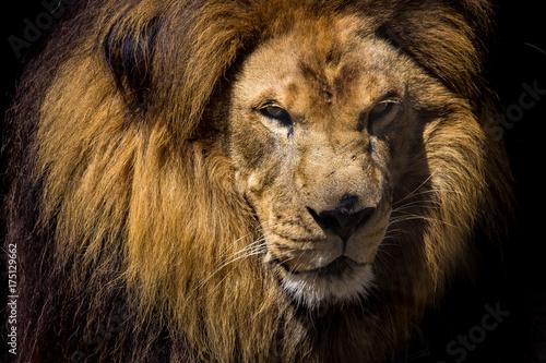 Aluminium Lion King Lion