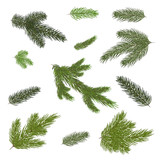 Close up of fir tree branch isolated .Vector illustration. Eps 10. - 175133491