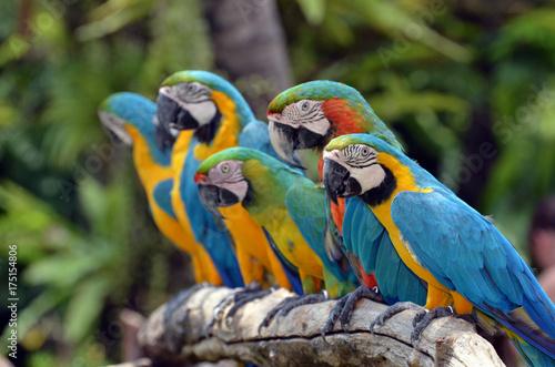 Aluminium Papegaai Row of Parakeets