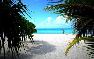 Plage de sable blanc et cocotiers lagon bleu Tikehau archipel Tuamotu Polynésie française