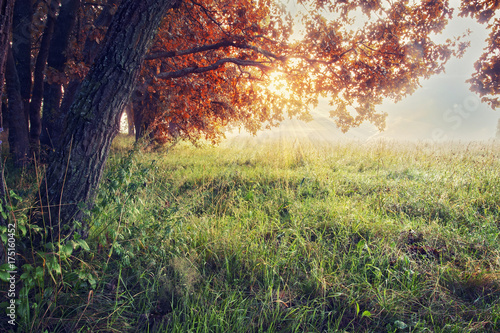 Foto op Canvas Herfst Autumn nature. Autumn background. Landscape of colorful fall trees on meadow.