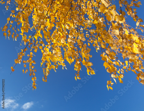 Aluminium Abstractie autumn foliage branch and blue sky