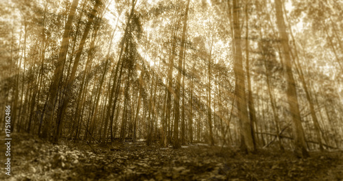 Aluminium Betoverde Bos God light in forest in sepia with divine energy and life force