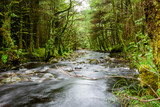Forest and river on Ben Nevis mountain, Scotland - 175168022