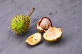 horse-chestnut - 175168680