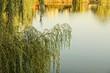 Постер, плакат: ветки лиственного дерева над водой озера