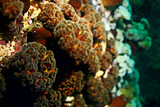 texture of the sea anemone macro tentacles corals - 175181638
