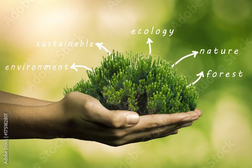 hands with tree and concepts, ecology
