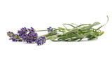 Lavender flowers bunch - 175191886