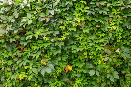 Background of green leaves Poster