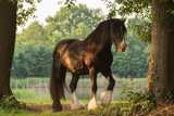 Shirehorse am See - 175202465