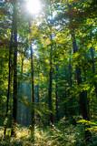 Sonnenstrahlen im Wald - 175204619