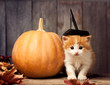 halloween pumpkin jack-o-lantern and ginger kitten on black wood background - 175213487