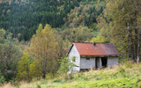 Ramshackle deserted house in the forest - 175213416