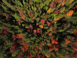 Aerial view of forest during fall