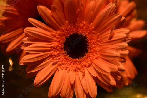 Aluminium Gerbera flower