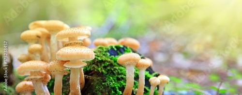 Beautiful mushrooms in the moss.
