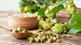 Barley in a wooden bowl, fresh and granulated hop in a spoon on a rustic table. Concept for craft beer and brewing - 175252457