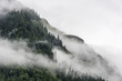 landscape of slope mountain with forest and pine tree with mist or thick fog