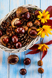 Chestnuts and cones in basket  - 175255292