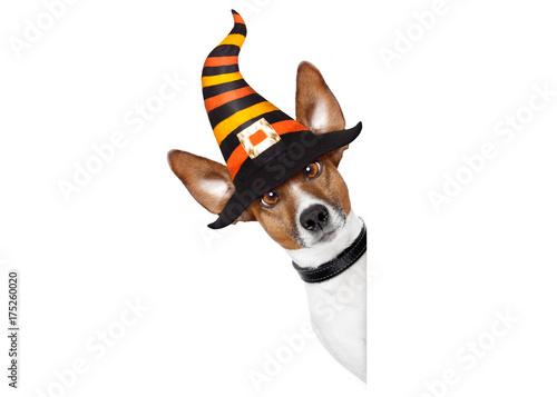 Papiers peints Chien de Crazy halloween pumpkin witch dog