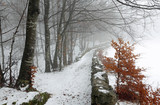 ice path in the middle of the cold snowy forest in winter - 175271449