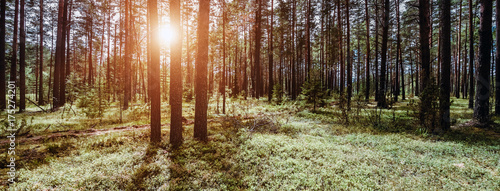Poster Natuur Wild forest panorama