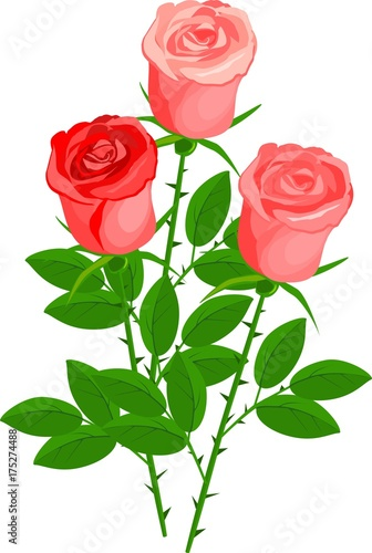 Three roses with green leaves on white background