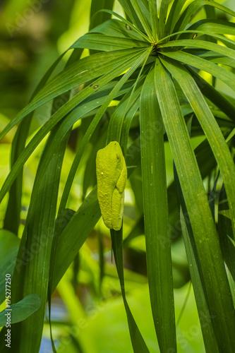 Fotobehang Kikker Tree Frog