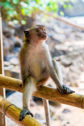 Fotobehang Aap Relaxing monkey on the fence resting