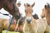 colt sticks to the mother of the horse. play with my mom. cute young horse look. animal relationships - 175284291