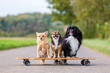three cute little dogs sitting on a skateboard