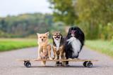 three cute little dogs sitting on a skateboard
