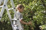 enfant et cueillette des pommes - 175304030