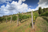 Tuscan vineyard landscape with Chrch, cipresses, grapes, Italy - 175306484