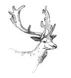 Deer head doodle sketch silhouette isolated on white background. Vector animal illustration - 175307041