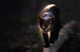 Beautiful black cat walking down the street