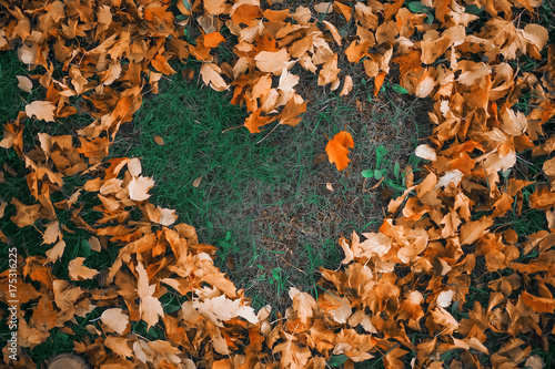 Heart of autumn leaves on the grass