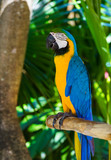 Parrot in Bali Island Indonesia - 175317673