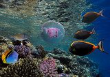 beautiful underwater world with corals and tropical fish. - 175320216