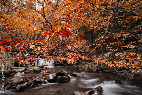 Poster Diepbruine Magic mountain stream with cascades in the autumn forest.