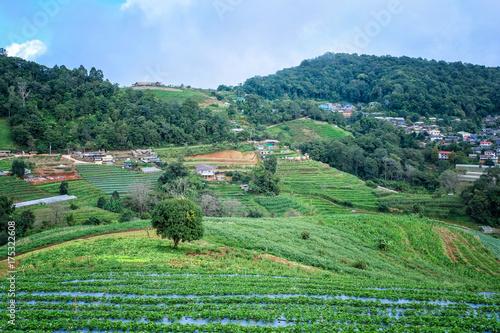 Foto op Plexiglas Rijstvelden Rice terrace in Chiang Mai, Thailand