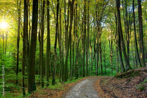 Keuken foto achterwand Weg in bos poranek w rezerwacie buków