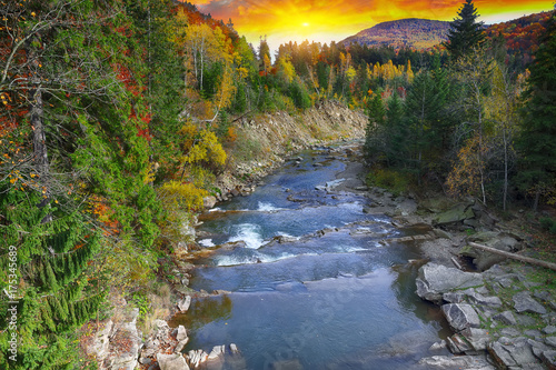 Tuinposter Herfst Autumn creek woods with colorfull trees foliage and rocks in forest mountain