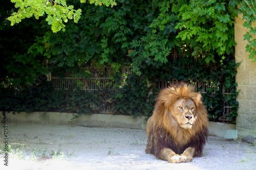 Aluminium Lion Löwe