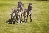wildpferde mit drei fohlen - 175358662
